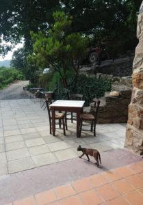 Frühstücksterasse des Milia Mountain Retreat. Und eine Katze. Foto: jag, 2017.