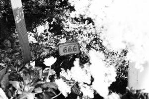 Martins Grabstätte auf dem Friedhof Sihlfeld, Grabnummer 666. Foto: Jan Graber, 2017.